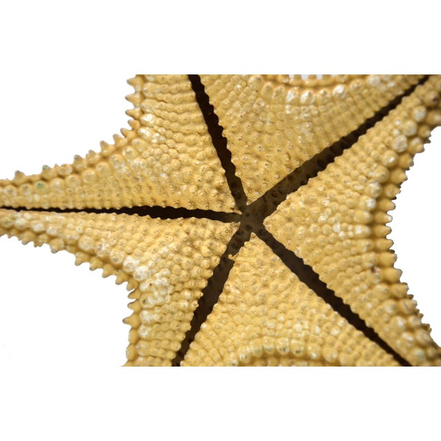 Vintage Nautical Starfish - Image 4 of 4