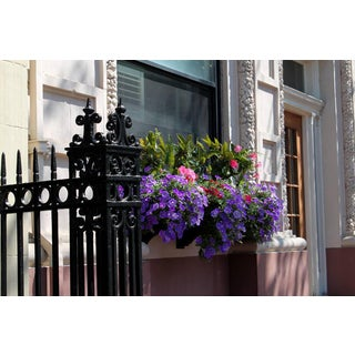 Flowers in Beacon Hill Boston