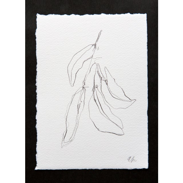 Image of Bay Leaf III Pencil Drawing