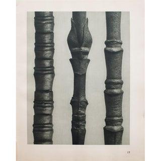 Karl Blossfeldt Double Sided Photogravure N13-14