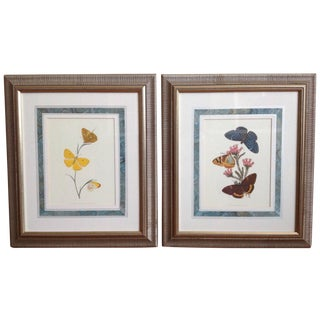 Framed Antique Butterfly Prints - A Pair