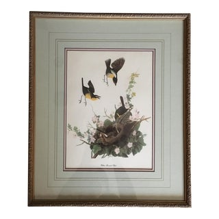 Vintage Framed Audubon Print of a Yellow Breasted Chat Bird