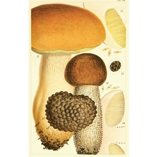 Antique 1891 British Edible Mushrooms Lithograph