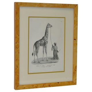 "19th Century German Lithograph ""Giraffe"" C.1850"