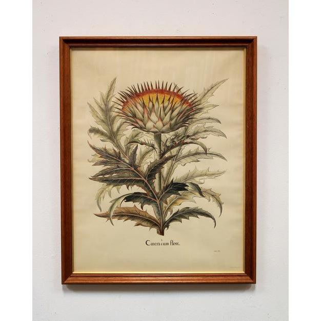 """Cinera Cum Flore"" Hand-Tinted Botanical Print - Image 5 of 8"