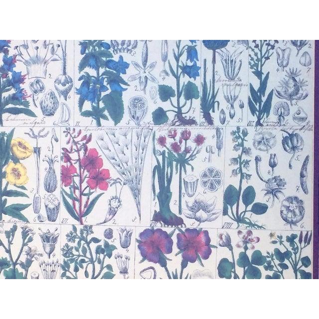 Vintage Scientific Rendering Botanical Art - Image 3 of 5
