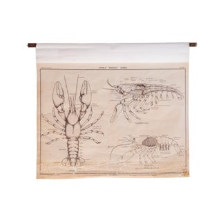 Early 20th Century Pull Down Chart of Lobster
