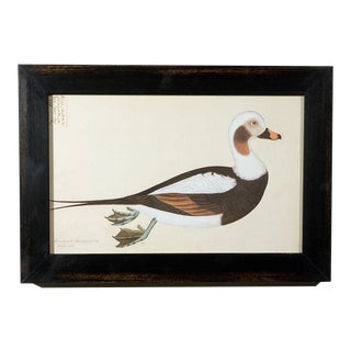 Set of Five Framed Duck Prints