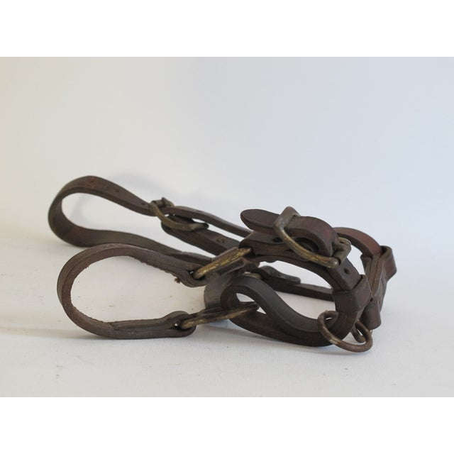 British Leather & Brass Pony Halter - Image 3 of 6