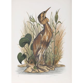 """Jerome Trollier """"Spangled Bittern"""" Lithograph"""