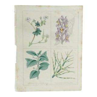 1860 Antique Print Plate 7