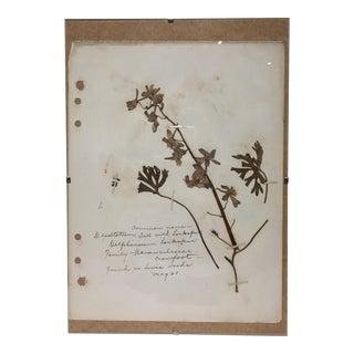 Vintage Tall Larkspur Botanical Journal Page