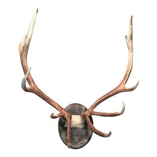 Vintage Deer Antler Trophy