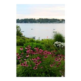 "Josh Moulton Photo - ""Maine Daisies"""