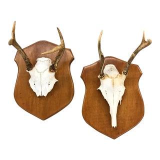 Genuine Vintage Mounted Antlers - a Pair