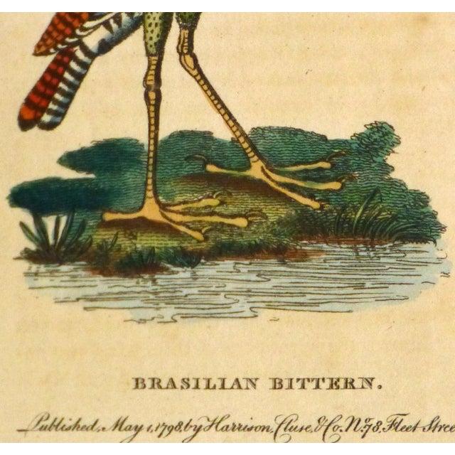 Antique Bird Print Engraving, Bittern, 1798 - Image 3 of 4