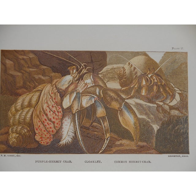 Antique Sea Creature Lithograph - Image 3 of 3