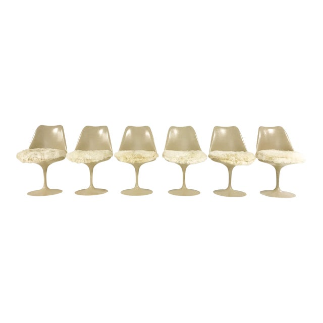 Eero Saarinen Tulip Chairs with Custom Brazilian Sheepskin Cushions - Set of 6 - Image 1 of 9