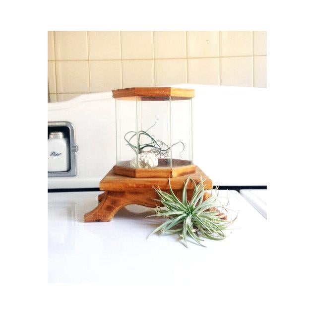 Image of Wood and Glass Octagonal Terrarium