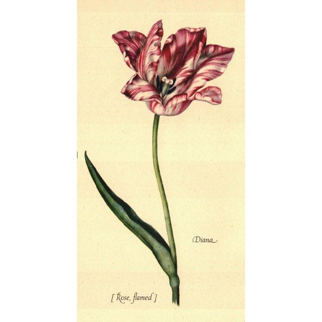 Image of Illustrated Tulipomania