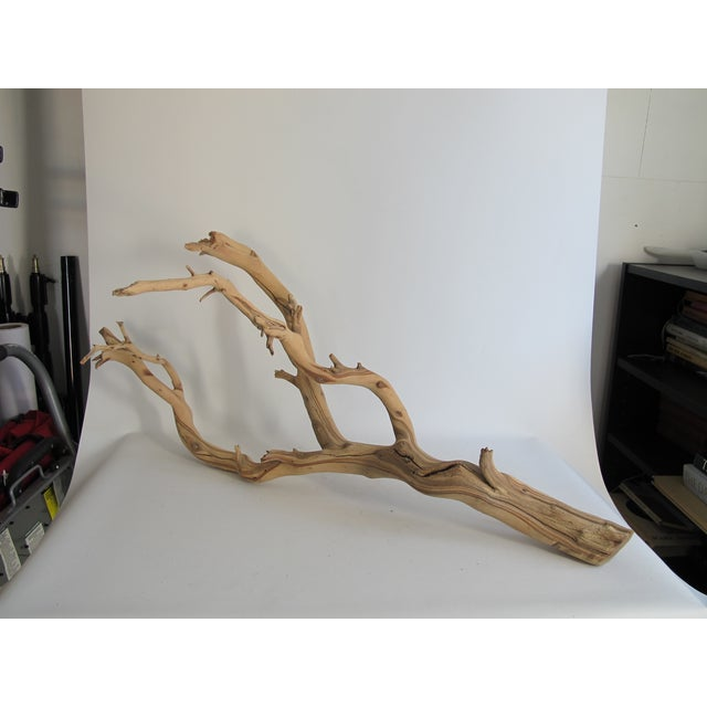 Preserved Driftwood Branch - Image 3 of 5