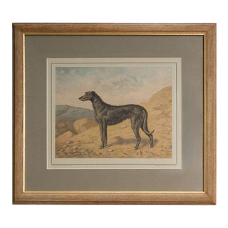 Sarreid Ltd Vintage Dog Print