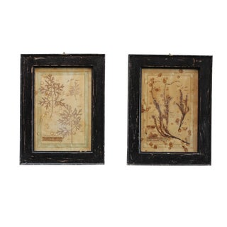 Vintage Framed Botanical Scientific Charts - a Pair