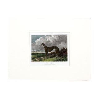 Copper Plate Engraving Print - Greyhound 1829
