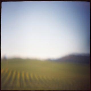 """Vineyard"" Photography"