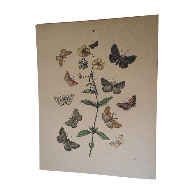 Antique Chromolithograph Butterflies/Moths - Image 1 of 3