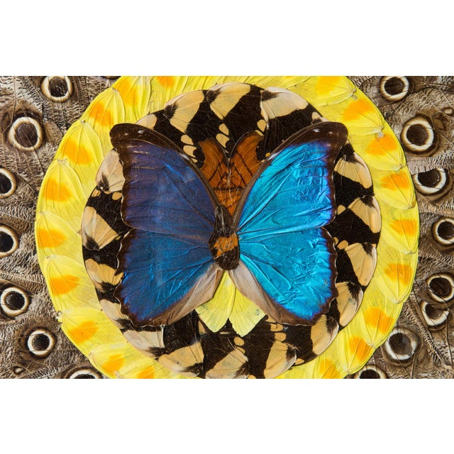 Art Deco South American Butterfly Wing Collage - Image 4 of 5