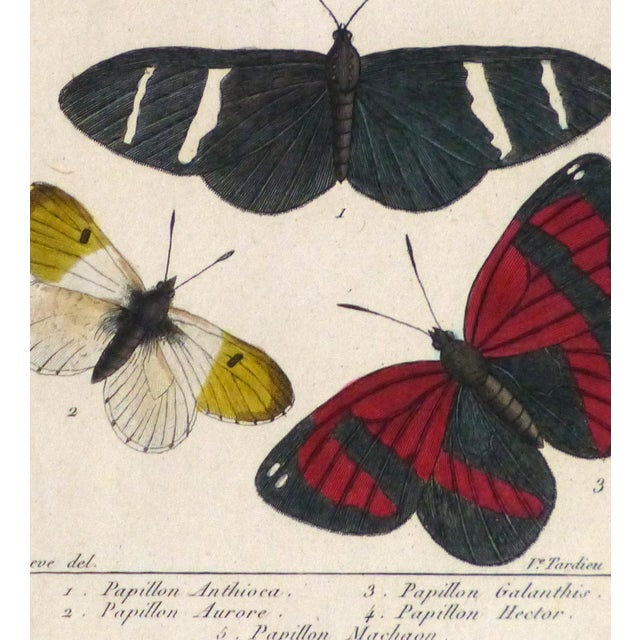 19th-Century Butterflies Engraving Print - Image 3 of 4