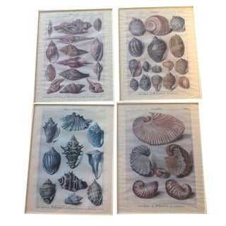VIntage French Shell Prints - Set of 4