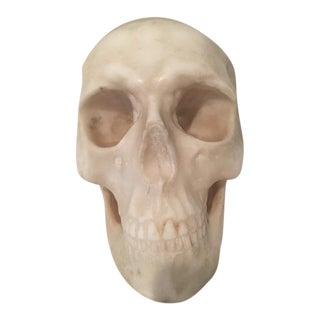 19th Century Italian Alabaster Life-Sized Skull