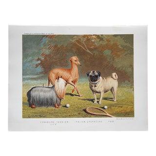 Antique Dog Lithograph-Yorkie, Italian Greyhound, Pug