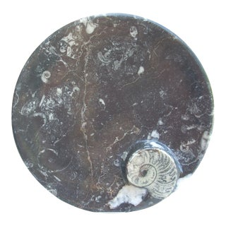 Natural Ammonite Specimen Plate