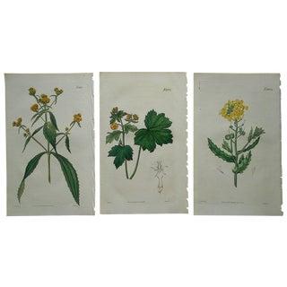 Three Antique Botanical Engravings