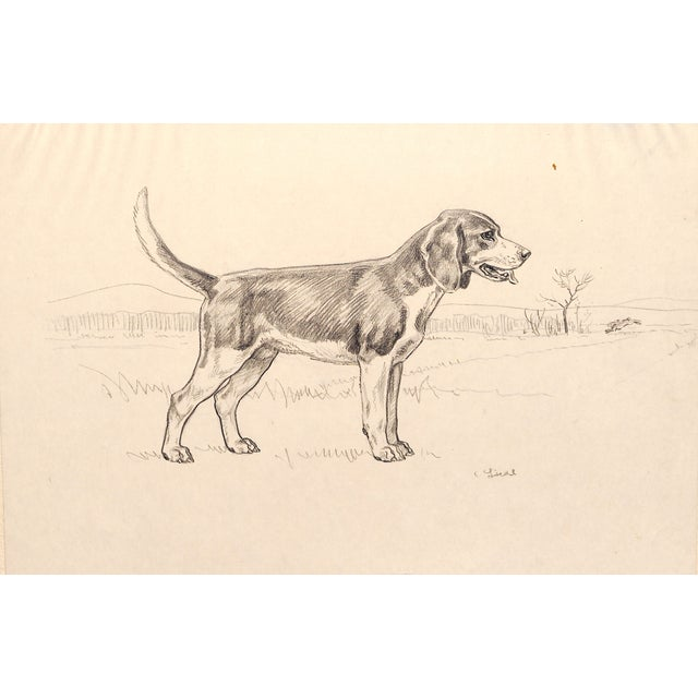 Image of Beagle, Pencil Drawing by Charles Liedl
