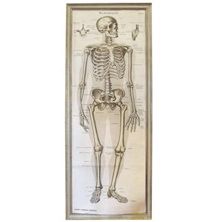 German Skeletal System Chart