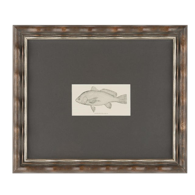 Vintage Fish Prints Elegantly Framed - Pair - Image 2 of 3