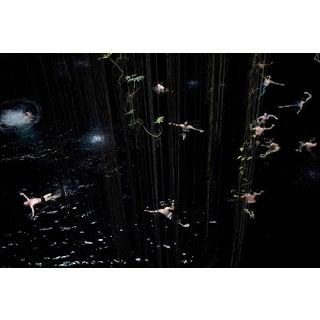 """""""Swim"""" 3847 by Francine Fleischer"""