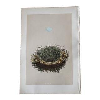 "1875 ""XXXVII"" Birds Nest Engraving"
