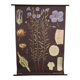 Flax German Botanical Poster