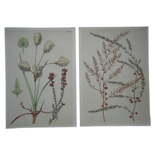Antique Stylized Botanical Lithographs - A Pair