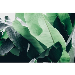 "Kaitie Bryant ""Monochrome Greens"" Photography"
