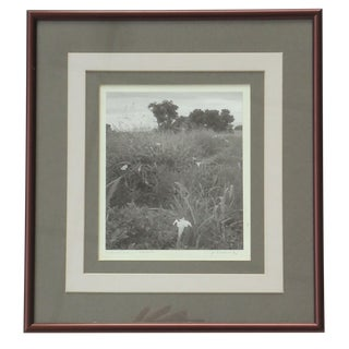 1975 Field Flowers Fort Huachuca Arizona Photograph