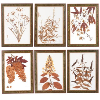 Ravello & Torino Italian Botanicals - Set of 6