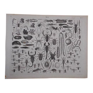 Antique Lithograph-Insects