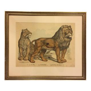 Custom Framed Antique Lion Color Print