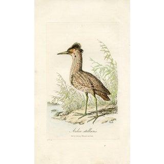 Antique 1821 Shorebird Bittern Print